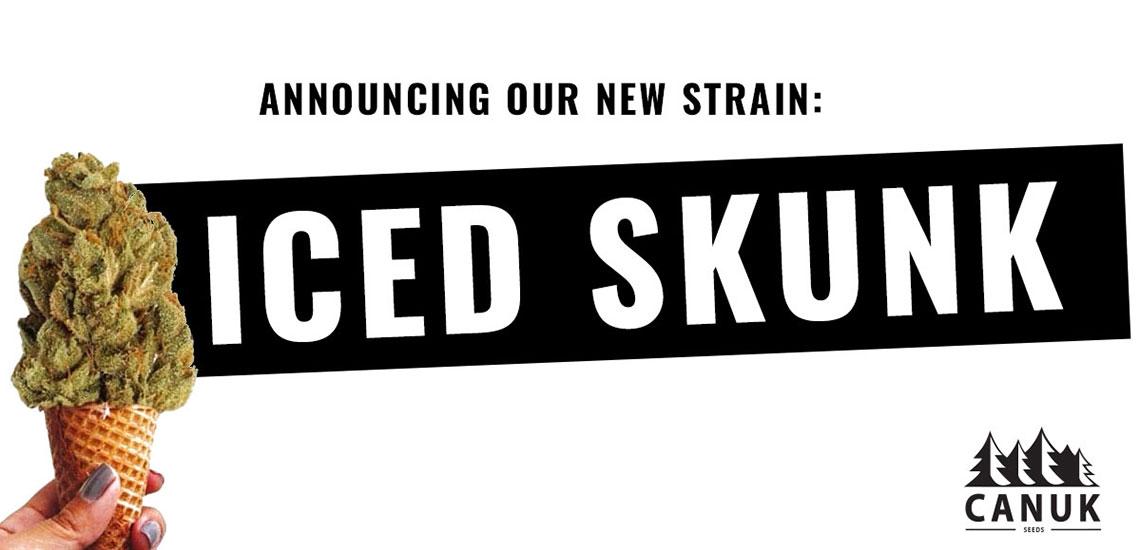 Iced Skunk - Canuk Seeds