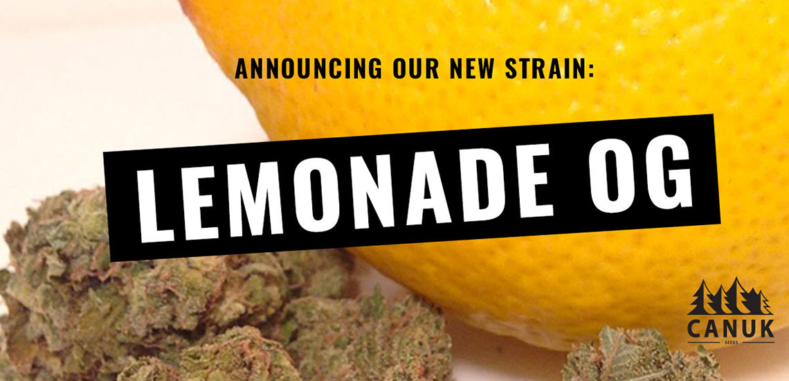 Lemonade OG - Canuk Seeds